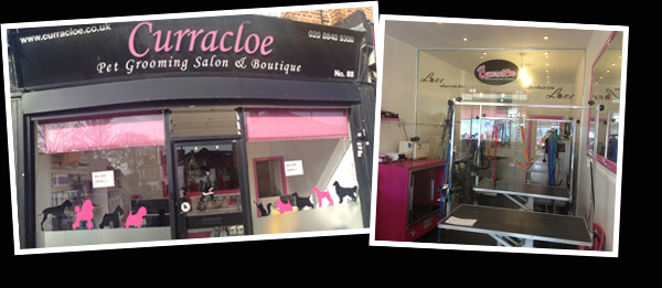 Curracloe dog groomer in west london hertfordshire solutioingenieria Gallery